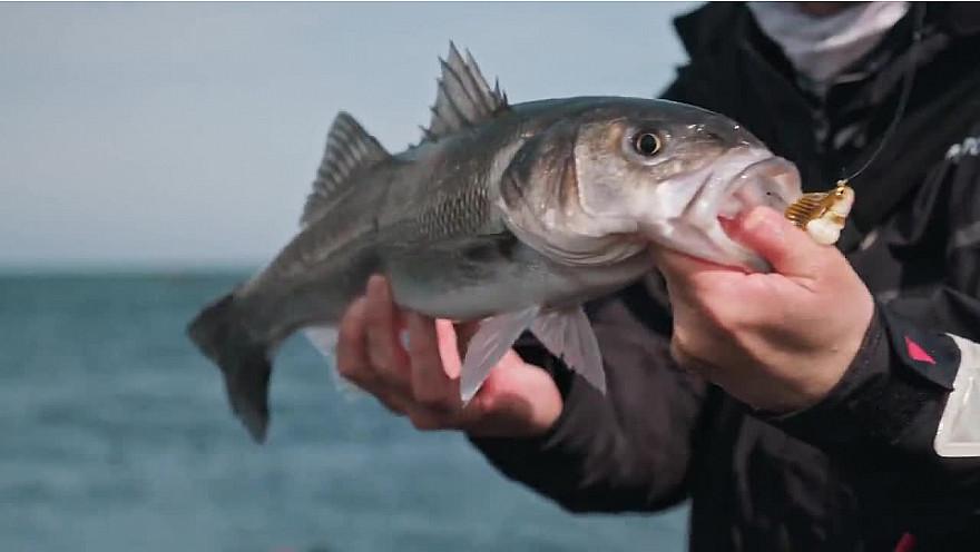 'Ultimate Fishing' sur Approche Rurale Smartrezo : Pêche du bar depuis le bord. Une belle session de début de saison avec Ludovic Bigot et Bruno Pebe. @Ultimate_Fishin